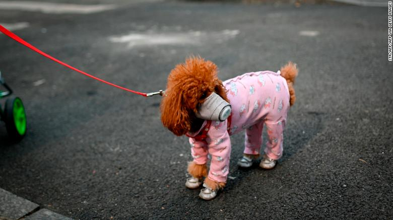 A dog wears a mask over its mouth on a street in Beijing on February 13, 2020. Pets article on Animals Lebanon