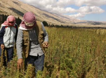 Marijuana article: Syrian refugees work in cannabis field in Bekaa. (Patrick Baz / AFP / The Guardian)