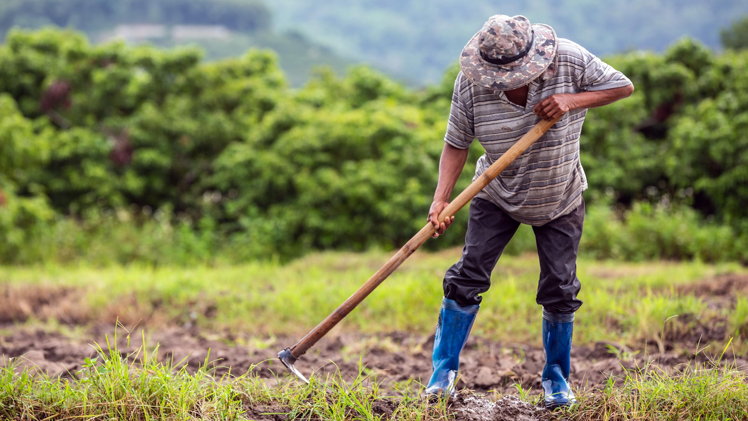 القطاع الزراعي ينهار ومزارعون يروون مآسيهم مع الدولار